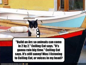 """Build an Arc so animals can come in 2 by 2."" Ceiling Cat says. ""It's gonna rain big time."" Ceiling Cat says. It's still sunny! Was I listening to Ceiling Cat, or voices in my head?"