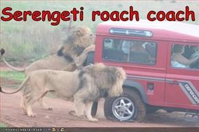 Serengeti roach coach
