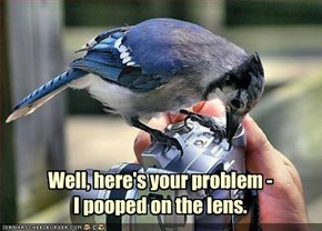 Well, here's your problem - I pooped on the lens.