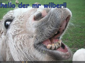 hello der mr wilber!!