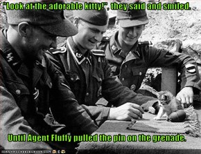 """Look at the adorable kitty!"", they said and smiled.  Until Agent Fluffy pulled the pin on the grenade."