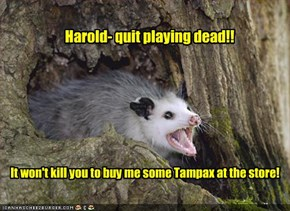 Harold- quit playing dead!!