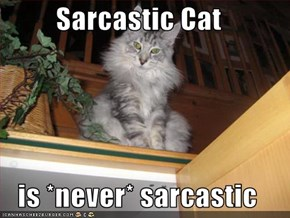 Sarcastic Cat  is *never* sarcastic