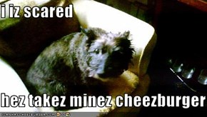 i iz scared  hez takez minez cheezburger