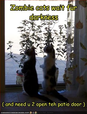 Zombie cats wait fur darkness