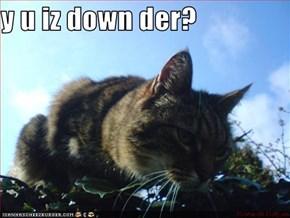 y u iz down der?