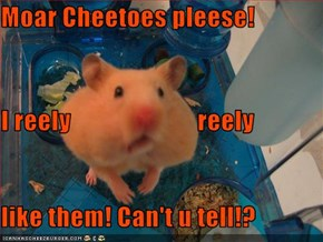 Moar Cheetoes pleese! I reely                         reely like them! Can't u tell!?