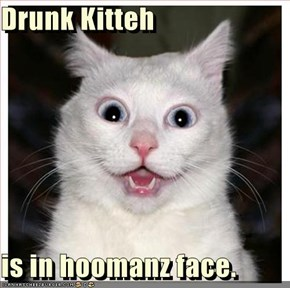Drunk Kitteh  is in hoomanz face.