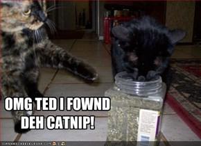 OMG TED I FOWND DEH CATNIP!