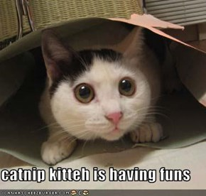 catnip kitteh is having funs