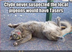 Clyde never suspected the local pigeons would have Tasers
