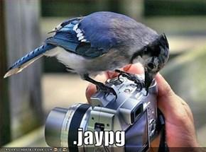 .jaypg