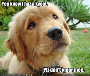 Yeu know I haz a kyoot.
