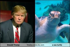 Donald Trump Totally Looks Like a sea turtle
