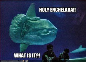 HOLY ENCHELADA!!