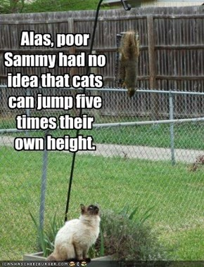 Alas, poor Sammy had no idea that cats can jump five times their own height.