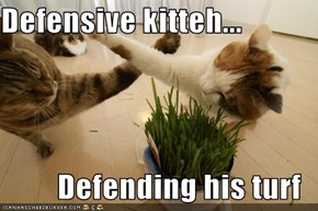 Defensive kitteh...  Defending his turf