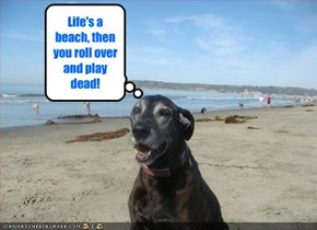 Life's a beach, then you roll over and play dead!