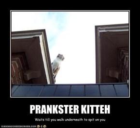PRANKSTER KITTEH