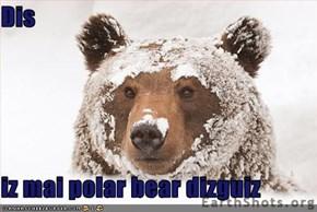 Dis   iz mai polar bear dizguiz