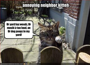 annoying neighbor kitteh