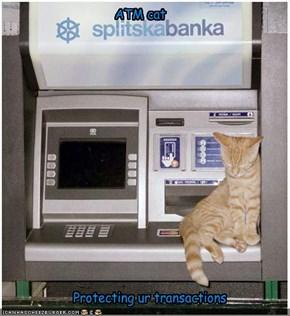 ATM cat