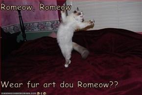 Romeow, Romeow  Wear fur art dou Romeow??