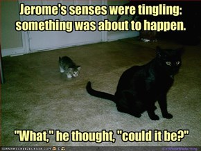 Jerome's senses were tingling: something was about to happen.