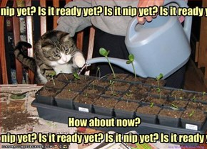 Is it nip yet? Is it ready yet? Is it nip yet? Is it ready yet?