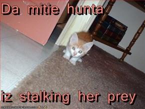Da mitie hunta  iz stalking her prey