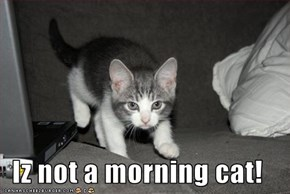 Iz not a morning cat!