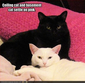 Ceiling cat and basement cat settle on pink.