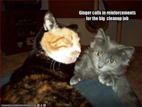 Ginger calls in reinforcements for the big  cleanup job