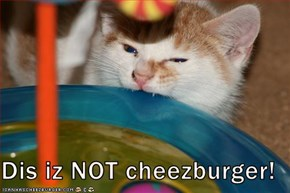 Dis iz NOT cheezburger!