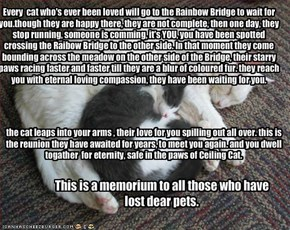 Every  cat who's ever been loved will go to the Rainbow Bridge to wait for you.though they are happy there, they are not complete, then one day, they stop running, someone is comming, it's YOU, you have been spotted crossing the Raibow Bridge to the other