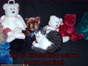 Der no kittehs here onie we beanie buddiez!!