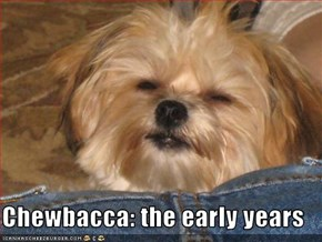 Chewbacca: the early years