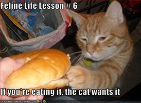 Feline Life Lesson # 6  If you're eating it, the cat wants it