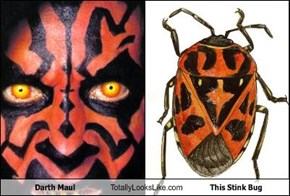 Darth Maul Totally Looks Like This Stink Bug