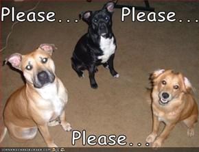 Please...     Please...      Please...