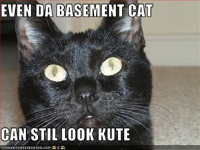 EVEN DA BASEMENT CAT  CAN STIL LOOK KUTE