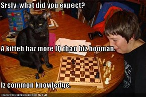 Srsly, what did you expect? A kitteh haz more IQ than hiz hooman. Iz common knowledge.