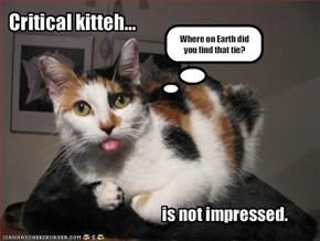 Critical kitteh...