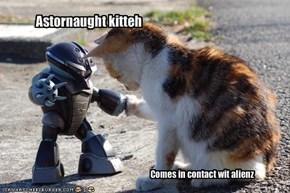 Astornaught kitteh