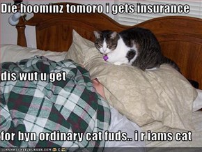 Die hoominz tomoro i gets insurance dis wut u get  for byn ordinary cat fuds.. i r iams cat