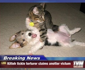 Breaking News - Kitteh tickle torturer claims anotter victum