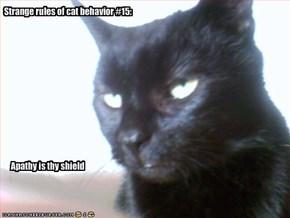 Strange rules of cat behavior #15: