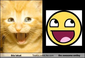this lolcat Totally Looks Like the awesome smiley