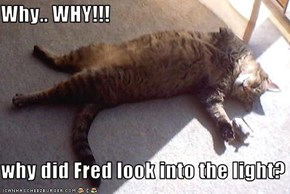 Why.. WHY!!!  why did Fred look into the light?