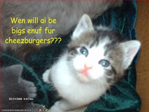 Wen will ai be bigs enuf fur cheezburgers???